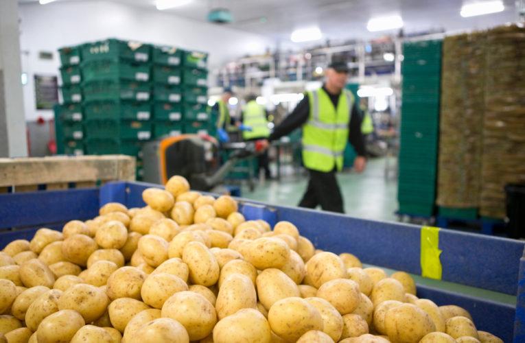 Hausse des exportations françaises de pommes de terre 2021